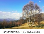 birch trees on moorland with... | Shutterstock . vector #1046673181