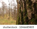 city moscow park fili  nature...   Shutterstock . vector #1046685805
