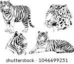vector drawings sketches... | Shutterstock .eps vector #1046699251