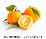 clementines citrus fruits... | Shutterstock . vector #1046724841