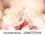 abstract blurred floral... | Shutterstock . vector #1046737045