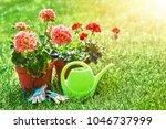 home gardening and flower...   Shutterstock . vector #1046737999