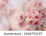 close up of someiyoshino cherry ... | Shutterstock . vector #1046753137