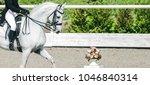 elegant rider woman and white... | Shutterstock . vector #1046840314