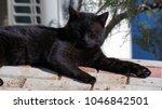black cat enjoying in the sun | Shutterstock . vector #1046842501