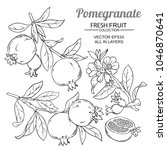pomegranate branches vector set | Shutterstock .eps vector #1046870641