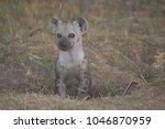 hyena cub peeking out of den | Shutterstock . vector #1046870959