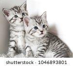 Stock photo two cute kitten kittens are beautiful striped 1046893801