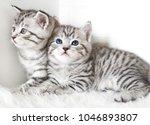 Stock photo two cute kitten kittens are beautiful striped 1046893807