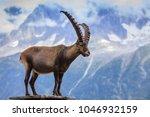 ibex  range of mont blanc.... | Shutterstock . vector #1046932159