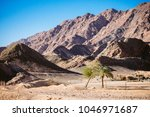 two palm trees surrounded by... | Shutterstock . vector #1046971687