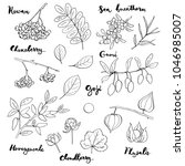 hand drawn painted set of... | Shutterstock . vector #1046985007