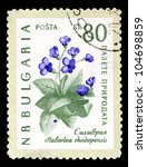 "Small photo of BULGARIA - CIRCA 1960: A stamp printed in Bulgaria shows image a Flower with the inscription ""Haberlea rhodopenis"" from the series ""Protect the environment, Flowers"", circa 1960"