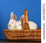Small photo of Rabbits in basket, Easter concept. Symbols of holiday. White wool of beautiful animals. Homemade rabbits in easter basket isolated on blue background. Pets for children. Rural Farm. Coward bunny