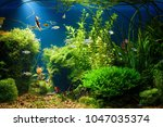 planted tropical fresh water... | Shutterstock . vector #1047035374