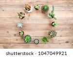 circle of succulents plant with ... | Shutterstock . vector #1047049921