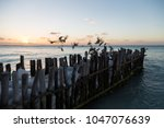 small pier with birds at sunset ...   Shutterstock . vector #1047076639