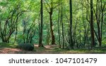 coniferous forest in the... | Shutterstock . vector #1047101479
