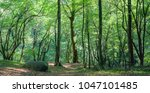 coniferous forest in the... | Shutterstock . vector #1047101485