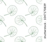 gotu kola. leaves. background ...   Shutterstock .eps vector #1047170839