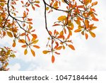 colored leaves  forest ... | Shutterstock . vector #1047184444
