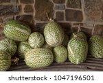 Display Of Fig Leaf Gourds ...