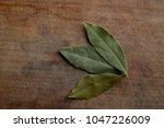 Tree Dry Bay Leaf On A Rough...