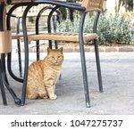 Big Serious Brown Cat Sitting...