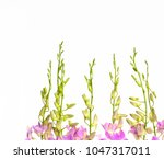 set of buds of pink orchid... | Shutterstock . vector #1047317011