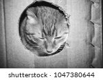 cat is playing in the box | Shutterstock . vector #1047380644