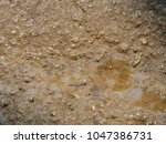 wet ground texture | Shutterstock . vector #1047386731