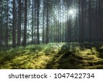 clearing in a forest where sun... | Shutterstock . vector #1047422734