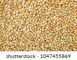 green buckwheat background | Shutterstock . vector #1047455869