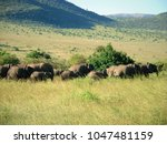 wild beautiful elephants | Shutterstock . vector #1047481159