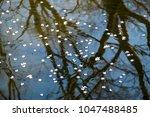 sakura petals reflection on... | Shutterstock . vector #1047488485
