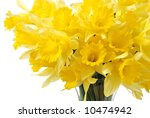 Bouquet of sunny yellow daffodils in a glass vase isolated on white background. - stock photo