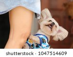 lovely dog with owner | Shutterstock . vector #1047514609