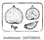 black and white fruit sketch... | Shutterstock .eps vector #1047538231