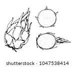 black and white fruit sketch... | Shutterstock .eps vector #1047538414