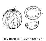 black and white fruit sketch... | Shutterstock .eps vector #1047538417