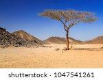 scenery of the african desert... | Shutterstock . vector #1047541261