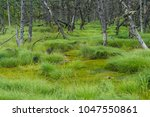 a picture of the northern swamp....   Shutterstock . vector #1047550861
