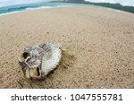 dead fish stranded on the beach ... | Shutterstock . vector #1047555781