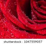 Wet Dark Red Roses Water - Fine Art prints