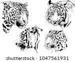vector drawings sketches... | Shutterstock .eps vector #1047561931