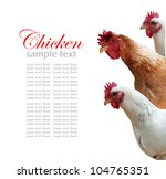 Hen Isolated On White