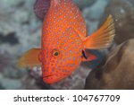 Diving in Seychelles, Anse Volbert, Praslin, Africa - stock photo