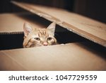 ginger cat is playing in the box | Shutterstock . vector #1047729559