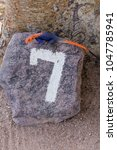 Small photo of 'Lucky' Namib Rock Agama (Agama planiceps) in the Kuene region of Namibia