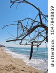 Small photo of Dry tree on the beach in Patara.